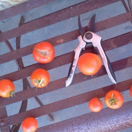 2016-02-26 Tomatoes on Steel Chair RESIZED