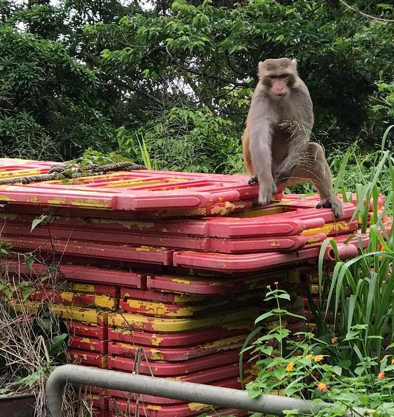 img_5647_hong-kong-monkey.jpg