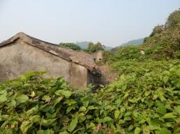 Overgrown House near Sha Lo Wan 2017
