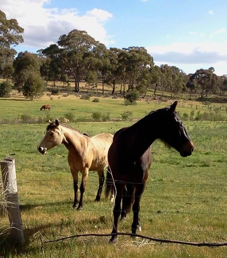 2018-10-06 School Road Horses 2_CROPPED