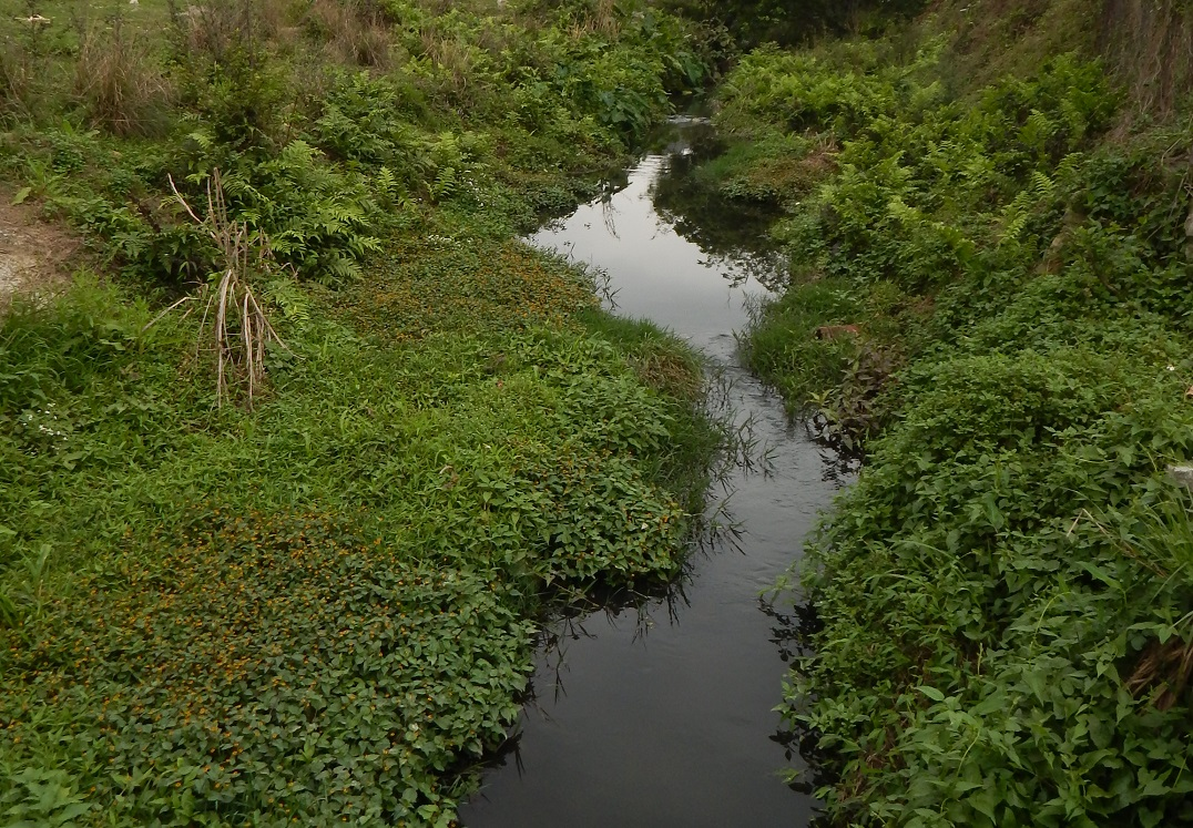 Natural Stream near Kam Tin 2016 THREE