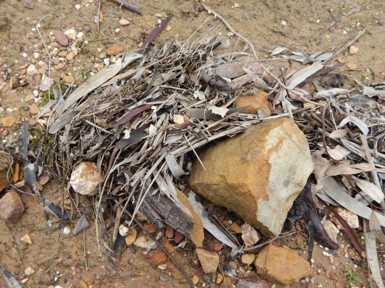 Dam Flotsam Twigs RESIZED_13 AUG 2019