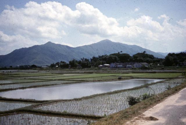 Peter Varney_Paddy Fields East of Yuen Long_1 JAN 1958