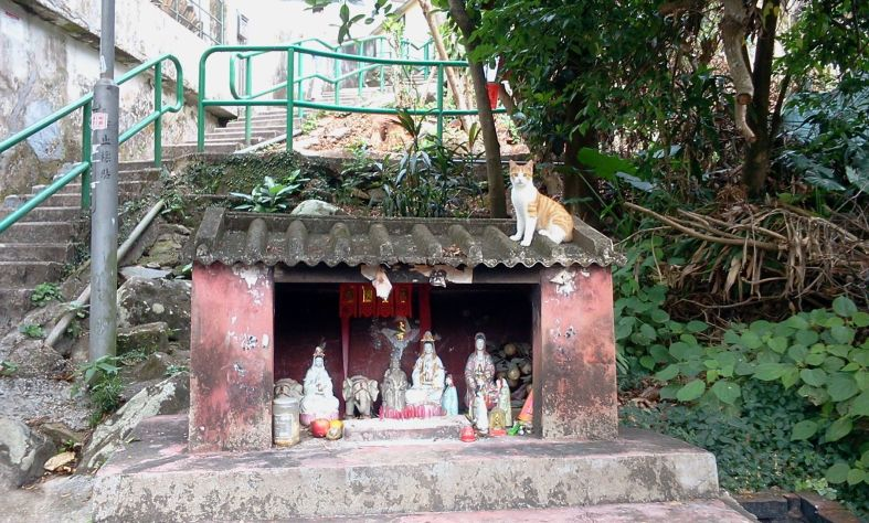 2018-12-02 Sai Kung Cat & Shrine 2