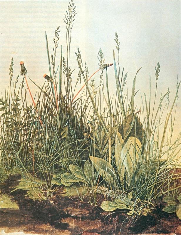 Albrecht Durer_Das große Rasenstück
