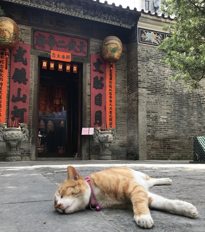 Tai Po Man-Mou Temple Cat TWO_3 MAR 2020
